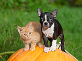 DOK 01 RK0631 01
