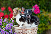 DOK 01 RK0633 01