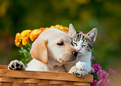 DOK 01 RK0654 01
