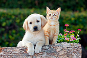 DOK 01 RK0665 01