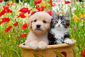 DOK 01 RK0670 01