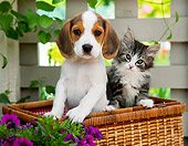 DOK 01 RK0677 01