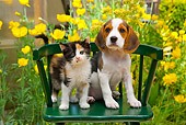 DOK 01 RK0681 01