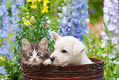 DOK 01 RK0686 01