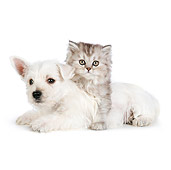 DOK 01 RK0689 01