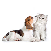 DOK 01 RK0692 01