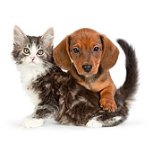 DOK 01 RK0695 01