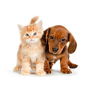 DOK 01 RK0696 01