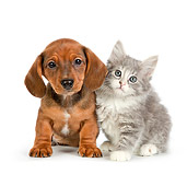 DOK 01 RK0697 01