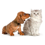 DOK 01 RK0698 01