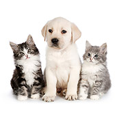 DOK 01 RK0703 01