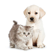DOK 01 RK0710 01