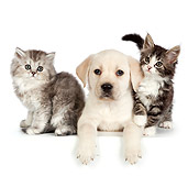DOK 01 RK0711 01