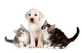 DOK 01 RK0712 01