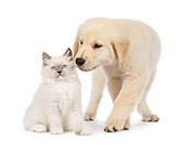 DOK 01 RK0721 01