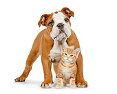DOK 01 RK0729 01
