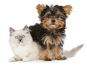DOK 01 RK0731 01