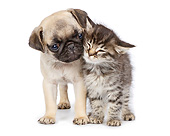DOK 01 RK0772 01