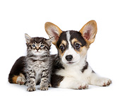 DOK 01 RK0774 01