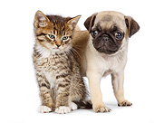 DOK 01 RK0778 01