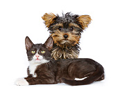 DOK 01 RK0780 01