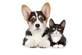 DOK 01 RK0781 01