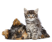 DOK 01 RK0801 01