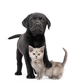DOK 01 XA0009 01