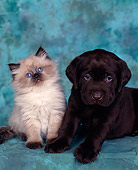DOK 01 RK0010 06