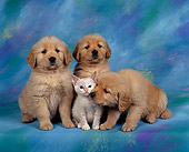 DOK 01 RK0051 10