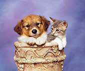 DOK 01 RK0081 04