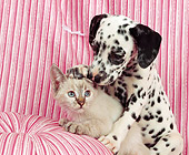DOK 01 RK0107 01