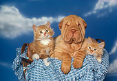 DOK 01 RK0131 10