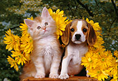 DOK 01 RK0155 10