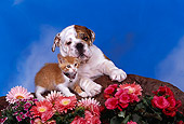 DOK 01 RK0211 25