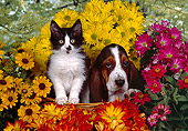 DOK 01 RK0218 06