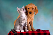 DOK 01 RK0237 01