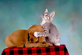 DOK 01 RK0241 01