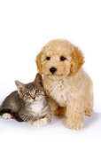 DOK 01 RK0258 01
