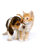 DOK 01 RK0288 01