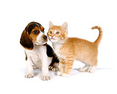 DOK 01 RK0290 01
