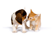 DOK 01 RK0292 01