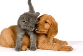 DOK 01 RK0300 01