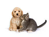 DOK 01 RK0308 01