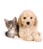 DOK 01 RK0309 01