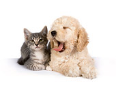 DOK 01 RK0310 01