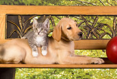 DOK 01 RK0328 01