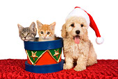 DOK 01 RK0377 01