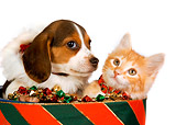 DOK 01 RK0387 01