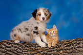 DOK 01 RK0417 01